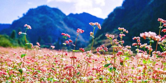 Nhiệt độ Hà Giang mát mẻ quanh năm